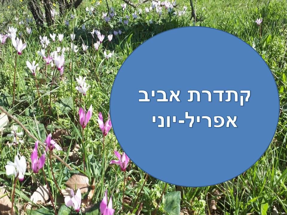 ק.אביב- סוגיות מקראיות בהיבט ע